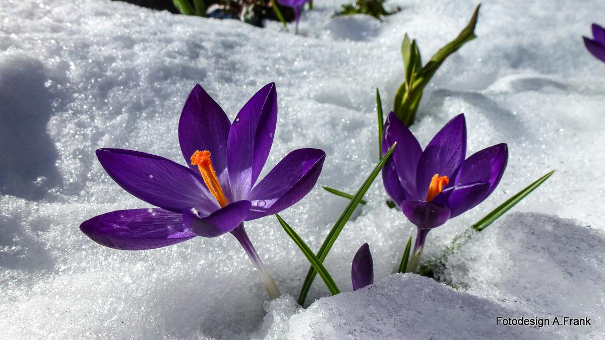 """Und der Frühling kommt """" Doch """"."""