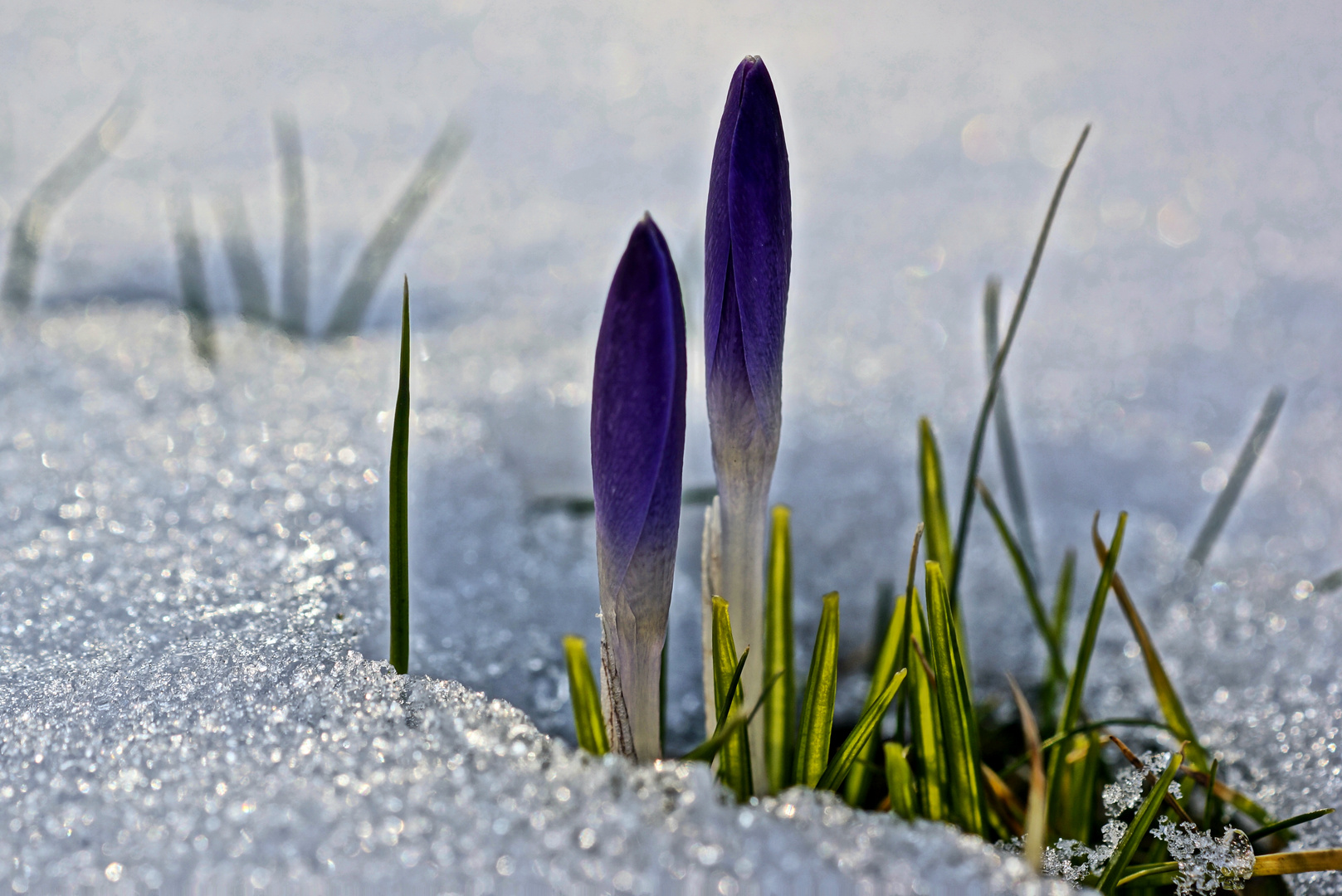 Und der Frühling schafft es doch