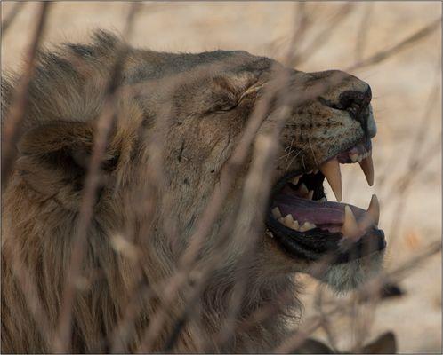 Und der Löwe...