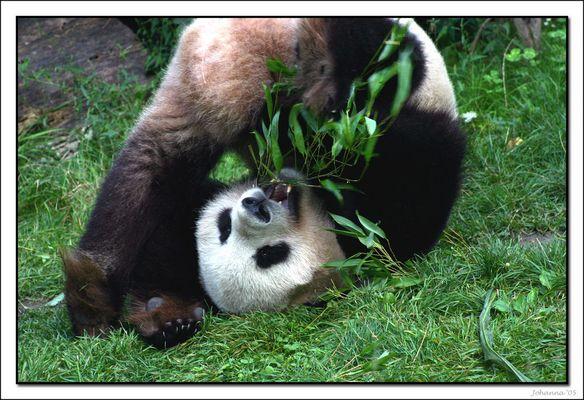 und der Panda