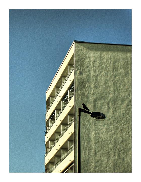 - und der schwarze sitzt weit oben, zu überblicken, sich zu wundern -