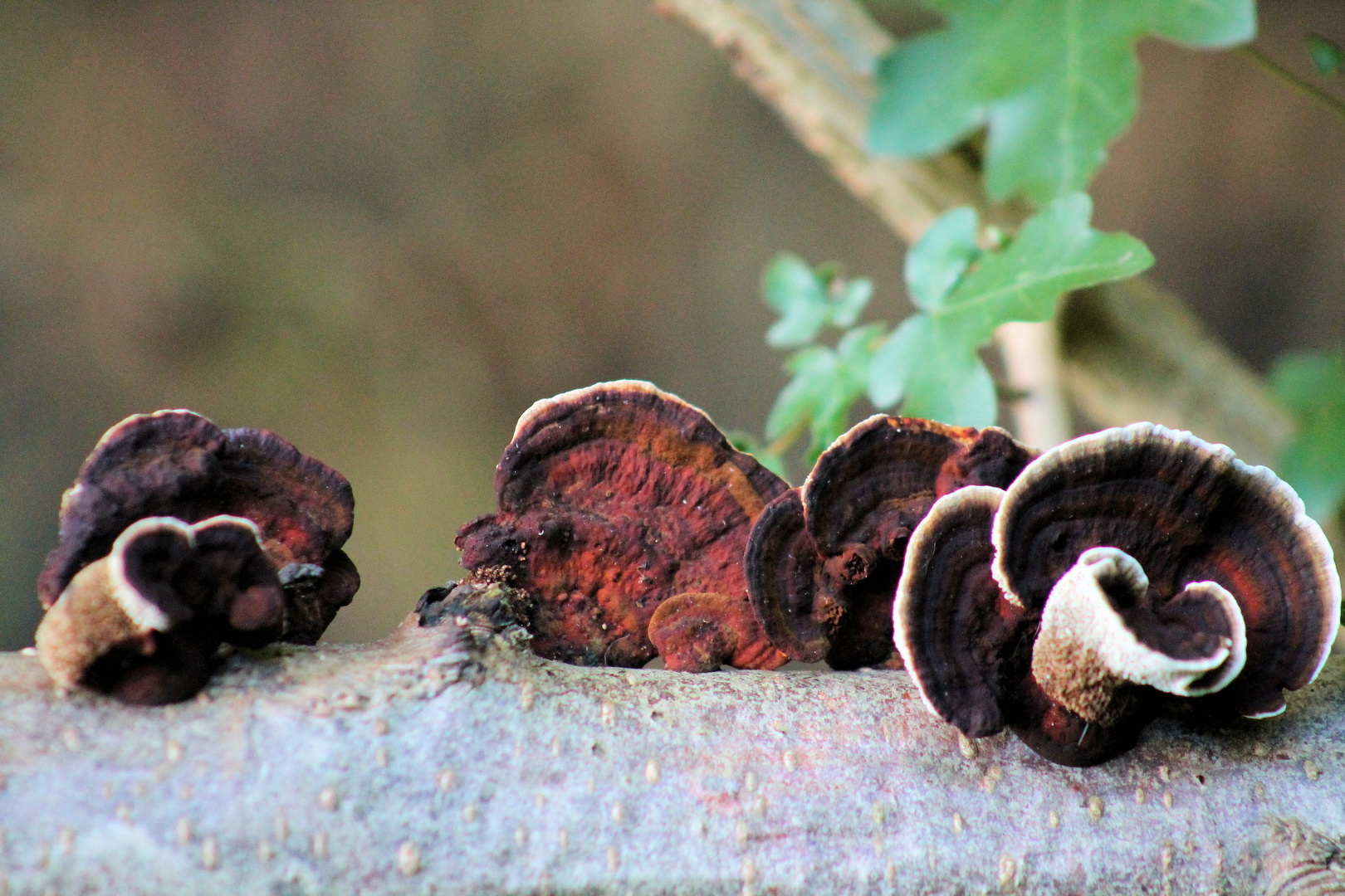 und die anderen Pilze