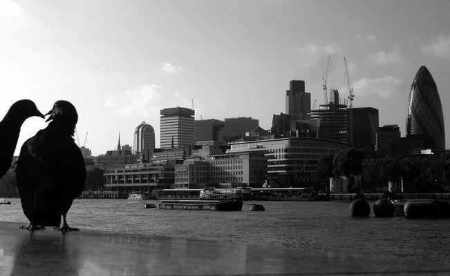 ... und die Raben von London