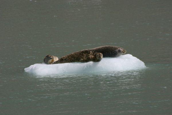 und die Robben freuen sich