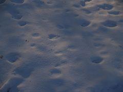 Und die Schneekristalle blitzern :-)
