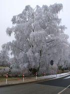 Und doch noch ein Winterbild hinbekommen !!!