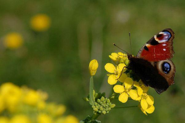 Und ein Schmetterlind war auch dabei...