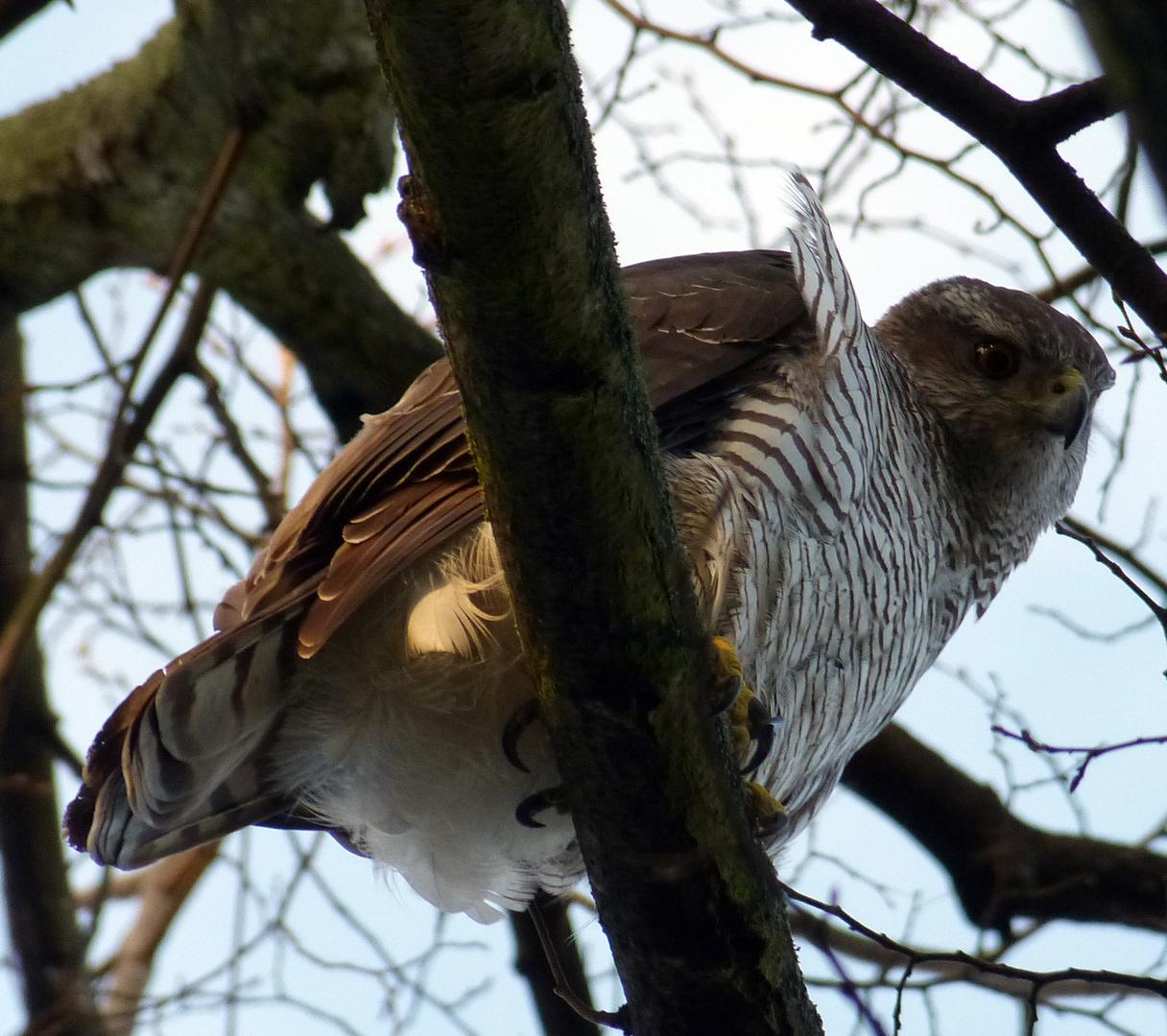 und einen großen Vogel hab ich auch noch............