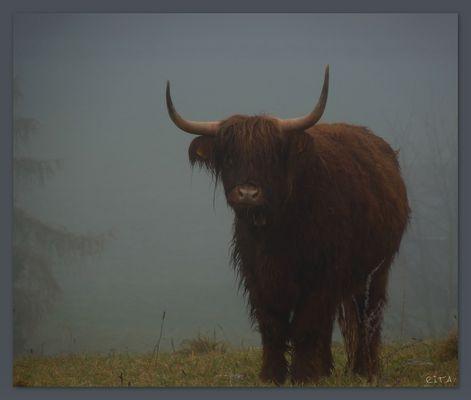 ... und er kam aus dem Nebel raus...