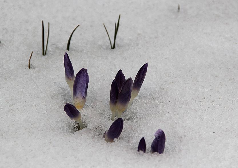 und er kommt doch: der Frühling