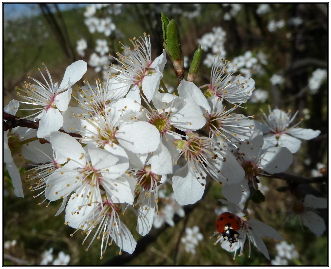 ... und er kommt doch - der Frühling