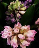 und erneut Blumen für Euch zum Sonntag