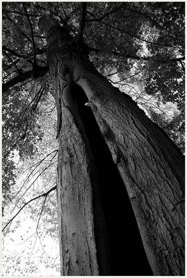 und es gibt ihn doch, den Limonadenbaum von Pippi Langstrumpf 2.