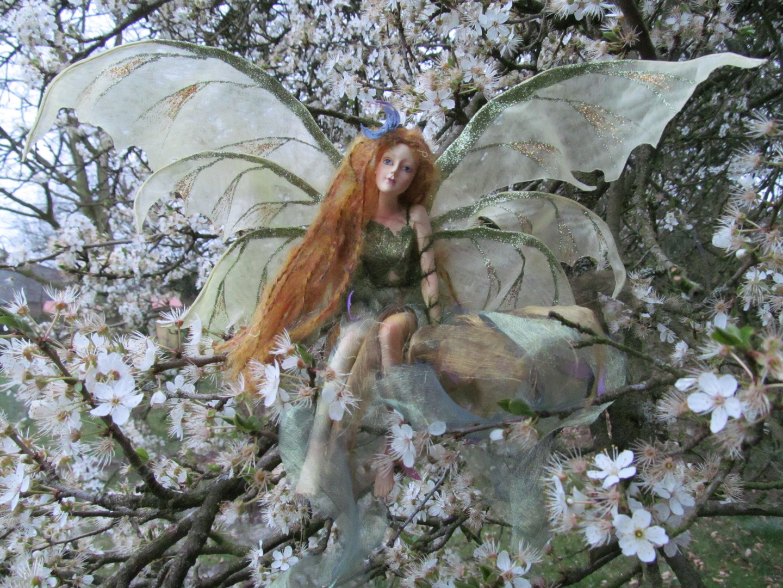 Und es gibt sie doch ..... in meinem Mirabellenbaum !