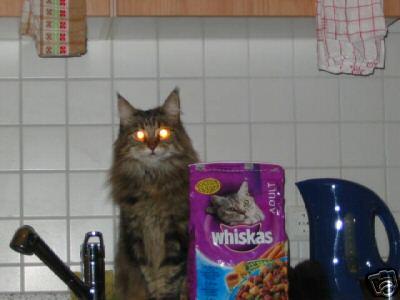 und es stimmt doch !! Katzen würden ............... kaufen !!