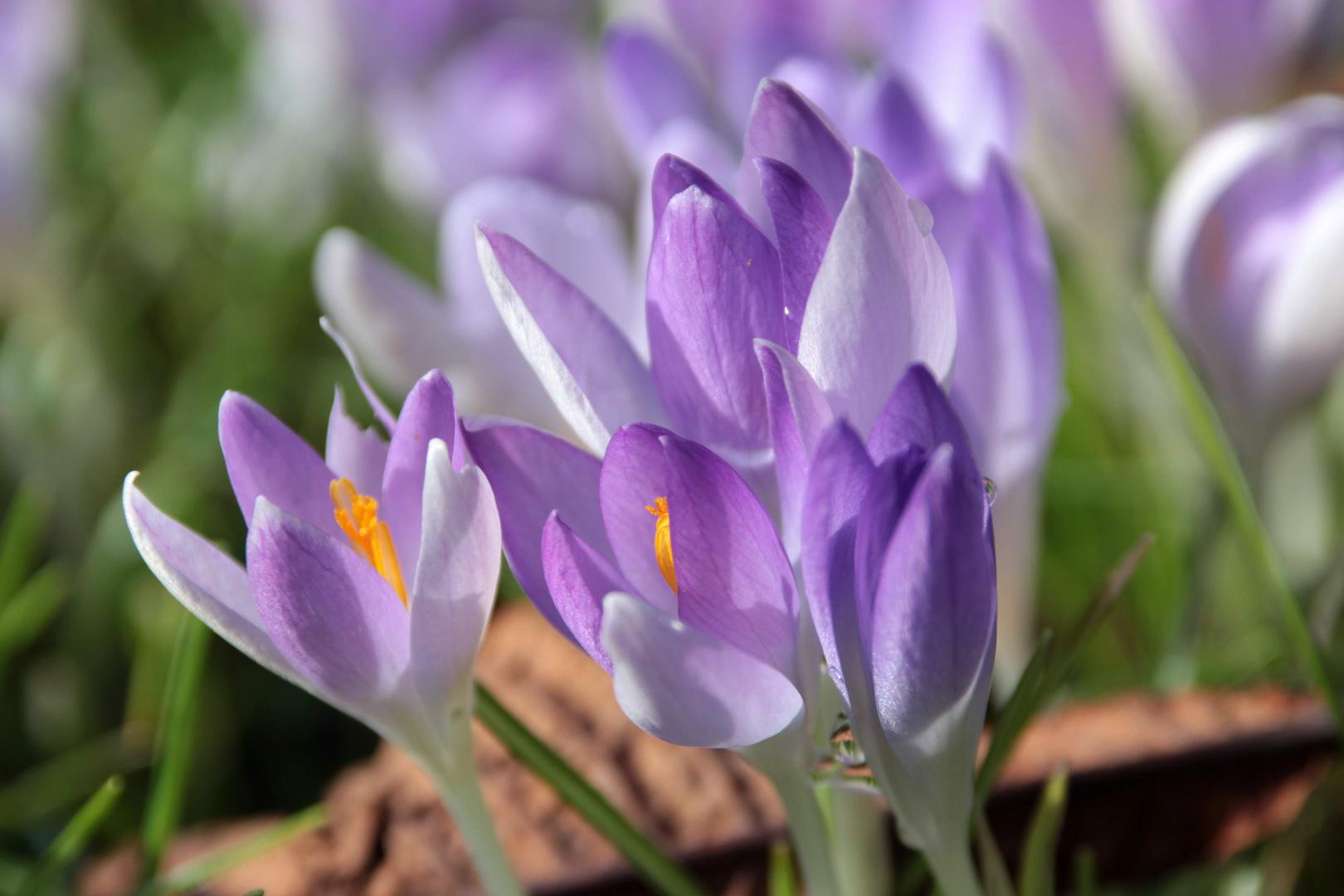... und es wird doch Frühling.