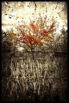 Und ewig funkeln die Herbstfarben...