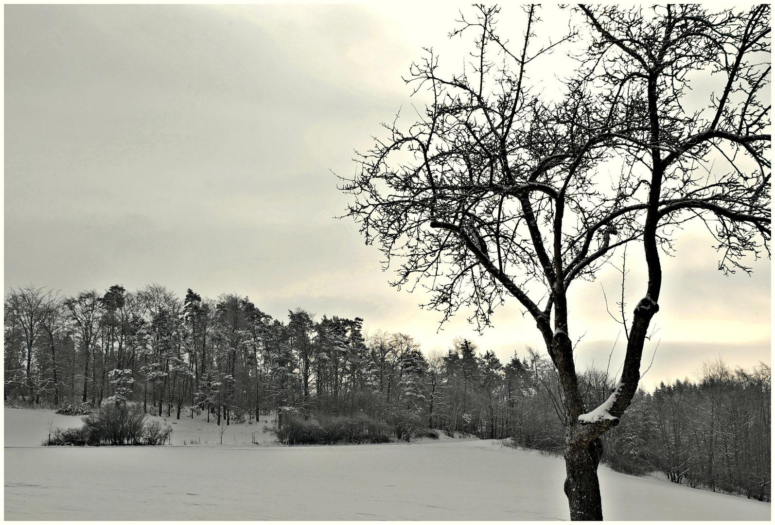 und ewig grüßt der Winter