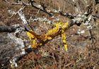 """und .. """"Frühling"""" zum dritten ... in Gelb"""