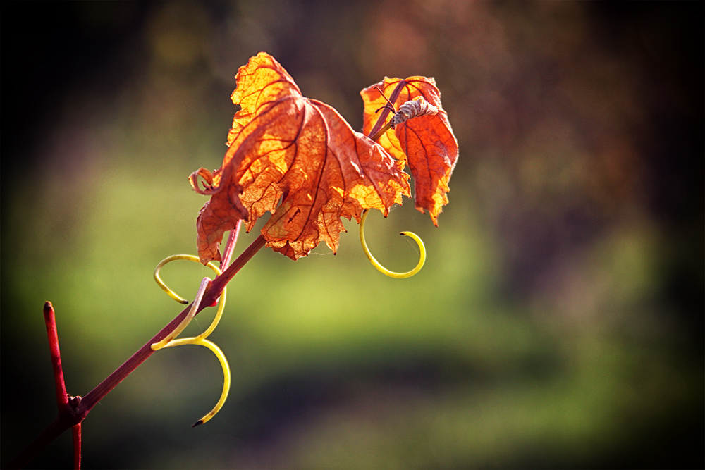 Und hier kommt ihr Herbstblatt ...