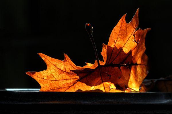 Und hier kommt ihr Herbstblatt