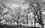 und hinter den Bäumen das Schloss Rosenstein