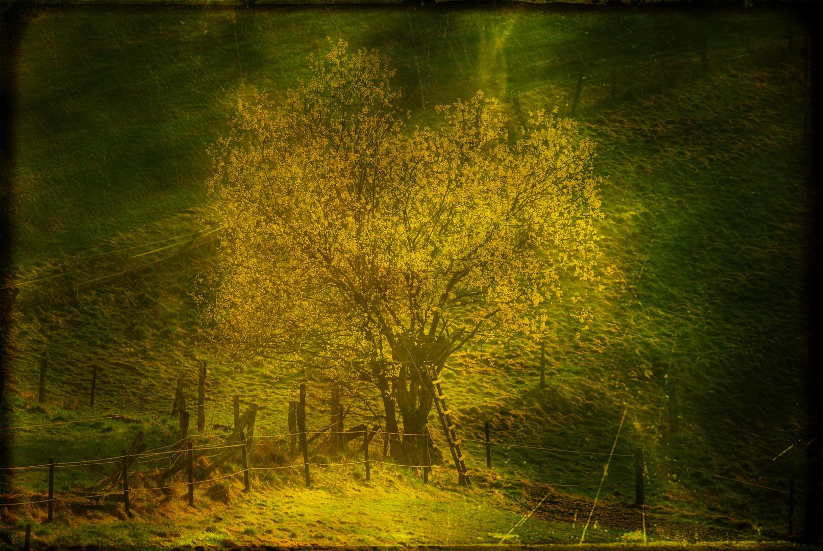 .........und ich lese unter diesem Baum Rilke