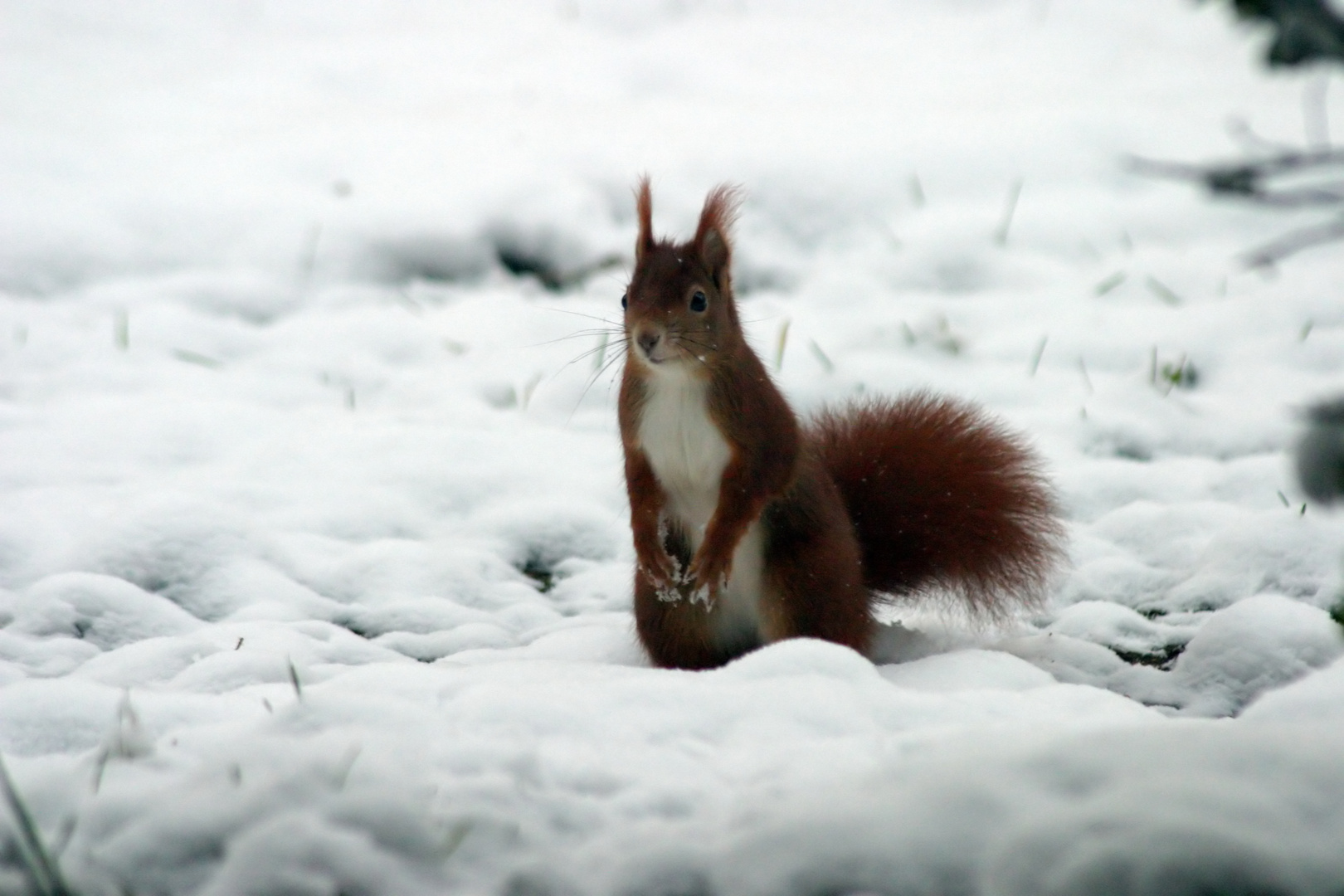 Und immer noch mehr Schnee oder auch wo hatte ich bloss meine Walnüsse versteckt?