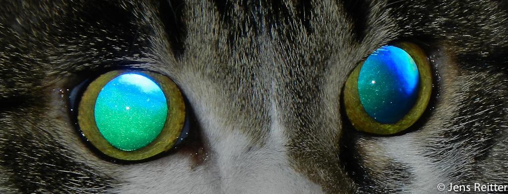 ... und in Katzen steckt doch ein Universum