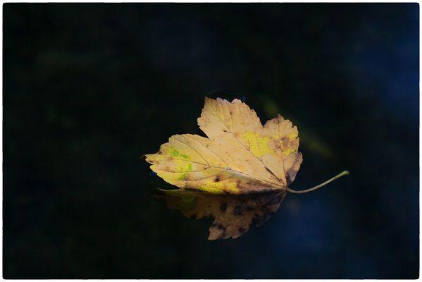 und kommt die goldene Herbsteszeit .....