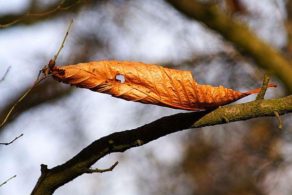 """""""...und leise säuselt der Herbstwind..."""""""