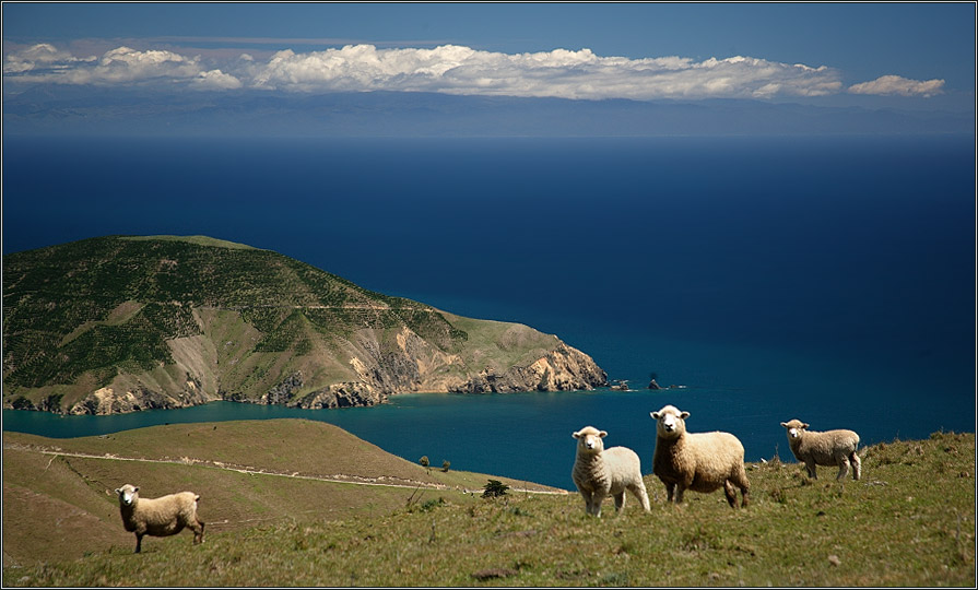 ...und manchmal hat es ein paar Schafe