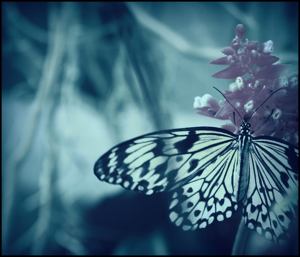 ...und manchmal ist das gefährlichste Tier für einen Menschen der Schmetterling im Bauch.