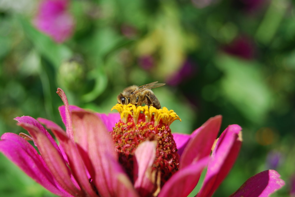 und meine erste Biene