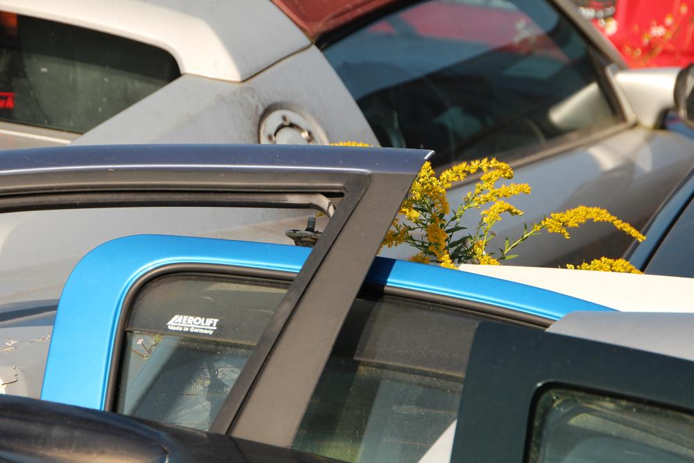 ...und mittendrin Blumen