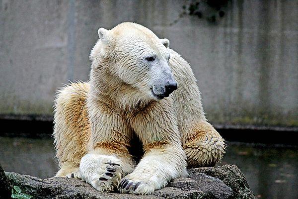 und natürlich hab ich auch das wichtigste in berlin auch besucht den berliner zoo