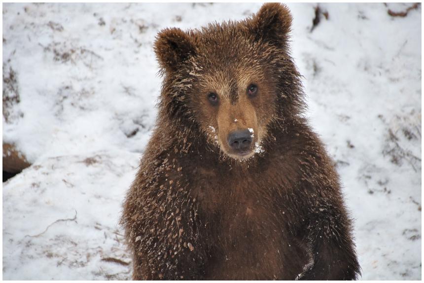 und noch ein Bärenkind