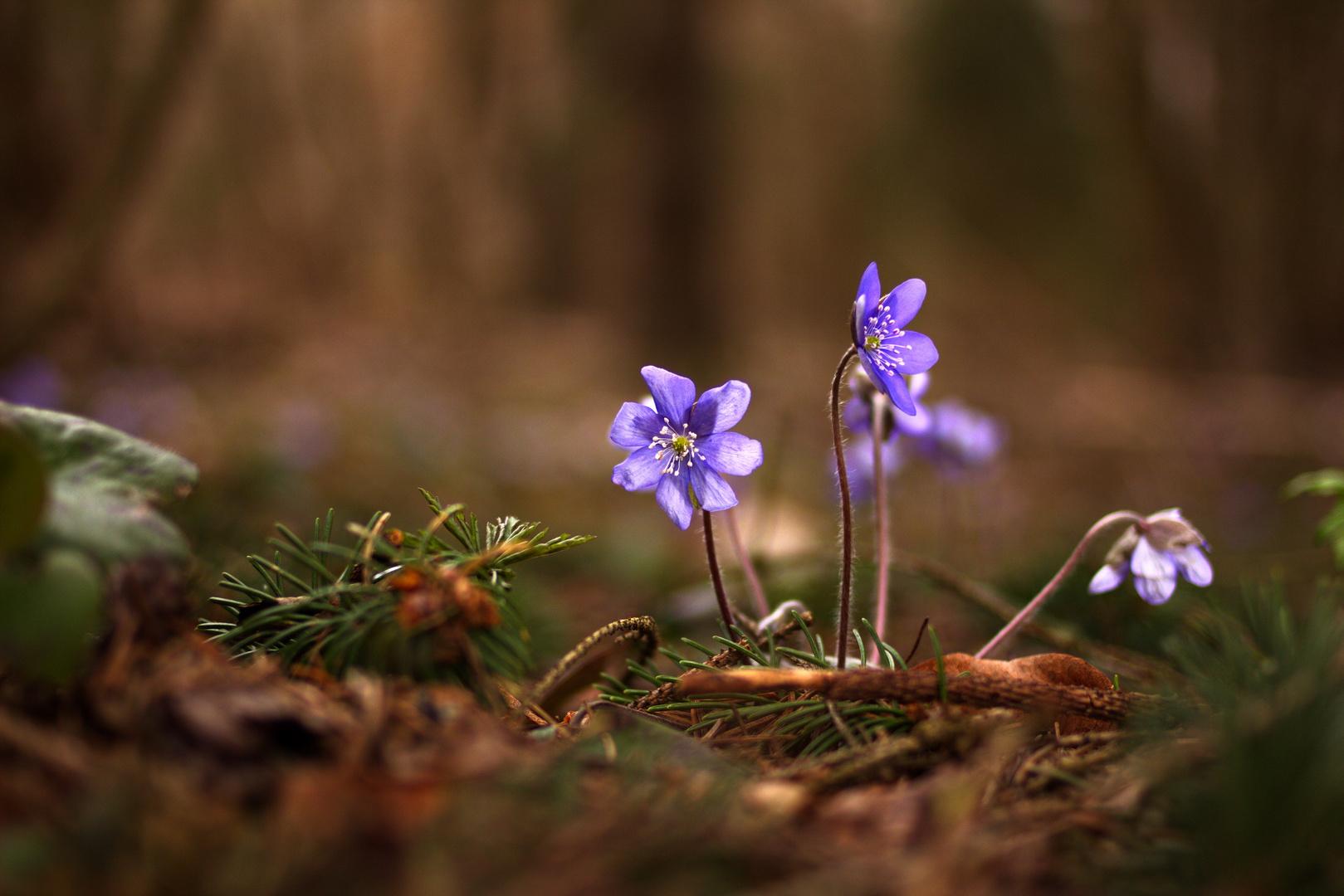 Und noch ein Frühlingsbote...
