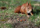 ...und noch ein Hörnchen...