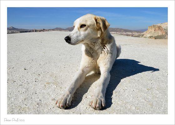 ... und noch ein Hund ...