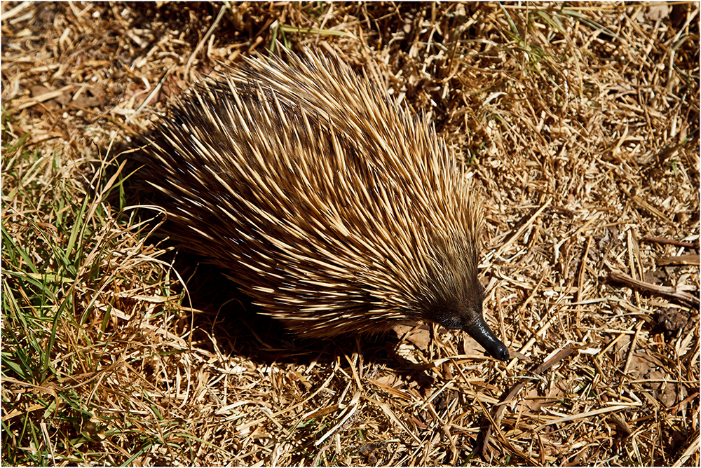 Und noch ein interessantes Tierchen ....