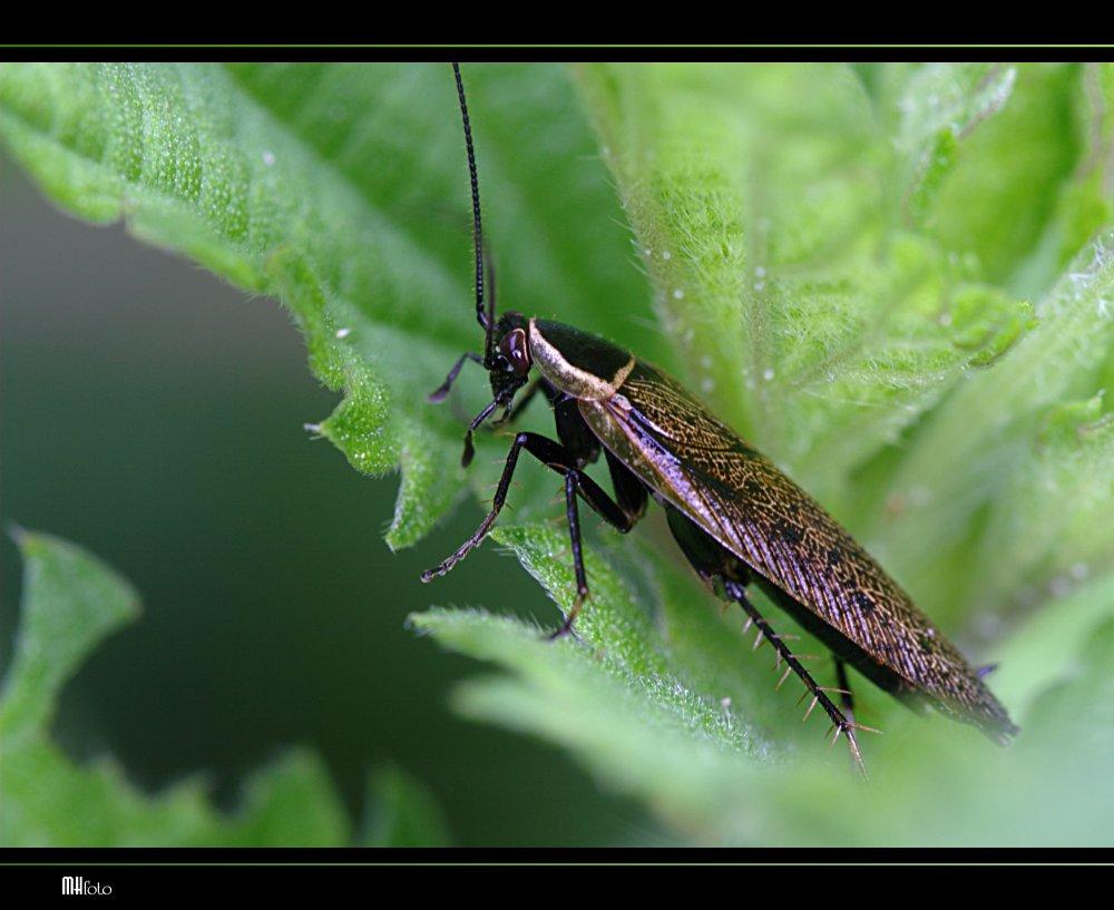 Und noch ein Käfer...