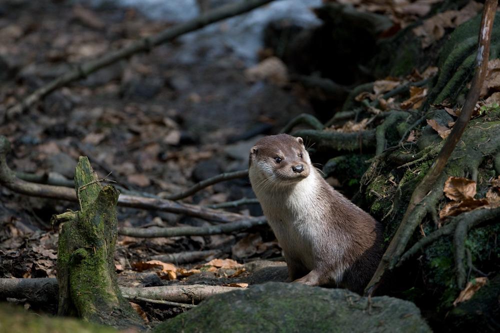 Und noch ein Nachschlag vom frechen Otter