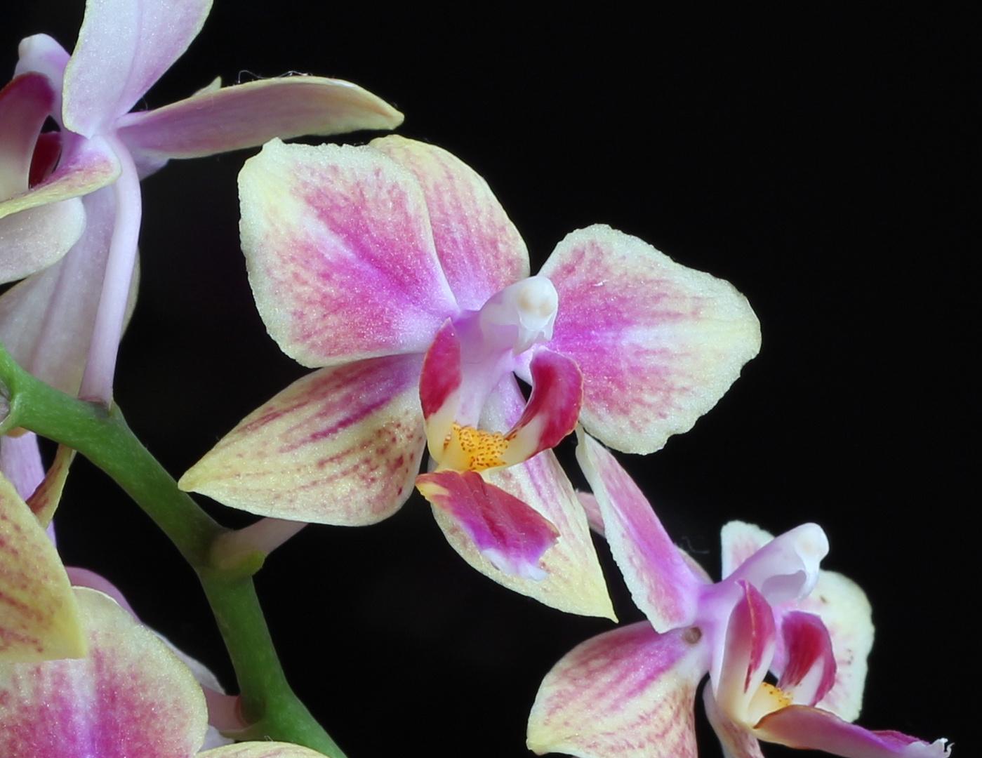 Und noch ein Versuch mit einer Orchidee ;)