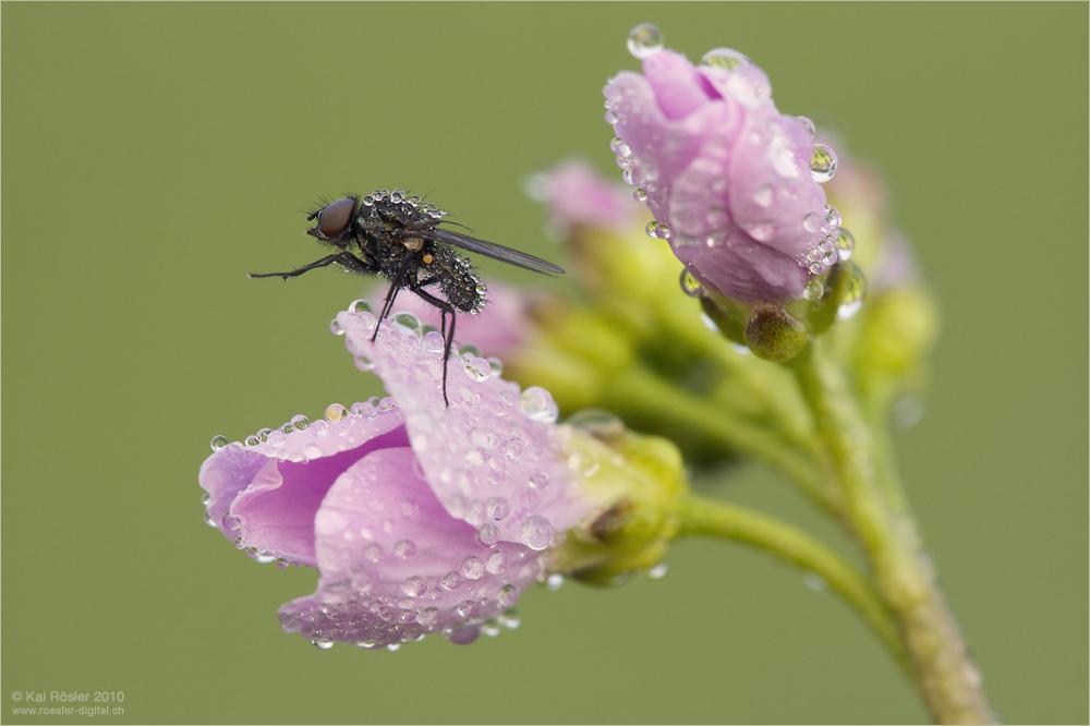 Und noch eine Fliege ...