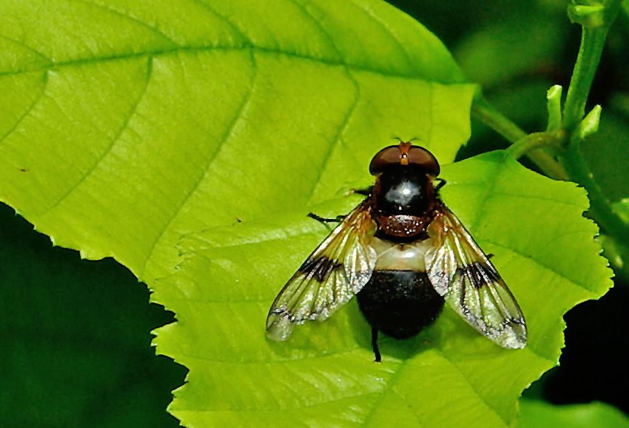 ....und noch eine Fliege....