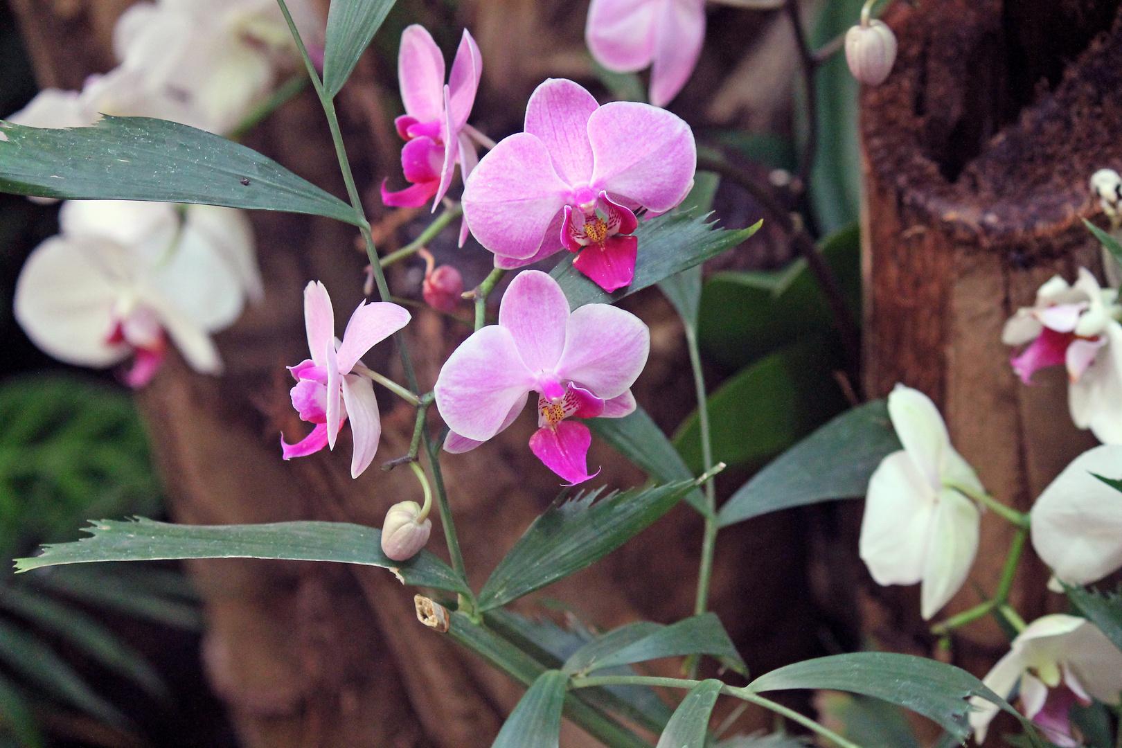 und noch eine orchidee