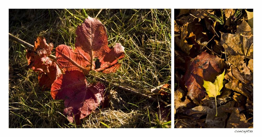 ...und noch mal Herbst