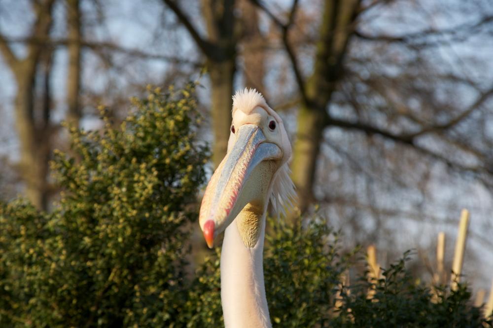 ... und noch so ein vorwitziger Vogel ...