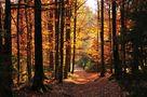und nochmal im Wald... von PeLeh